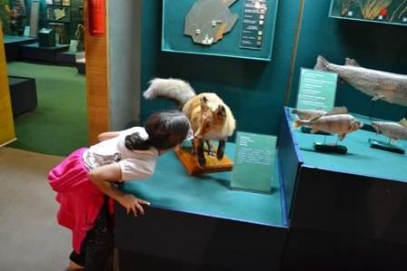 Музей природы Бурятии